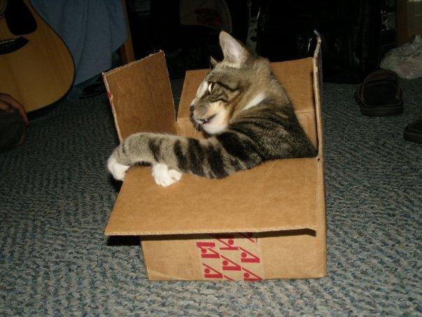 Name:  racecar cat.jpg Views: 318 Size:  58.2 KB